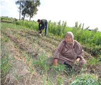 المرأة الريفية تمثل 49% من تعداد السكان في الريف