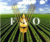 في اليوم العالمي للأغذية.. تعرف على «الفاو»