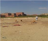 القضاء على 20 كلبا ضالا في مدرسة بالخانكة بعد عقر 14 طالبًا