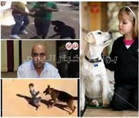 فيديو| مخاطر وفوائد تربية الكلاب وتأثيرها على الأطفال