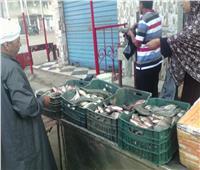 إقبال كثيف على منافذ بيع الأسماك بالبحيرة