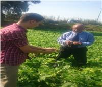«الزراعة» تشكل لجان لفحص زراعات الفاصوليا بمركز أبو المطامير
