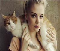 بعد سنوات.. القطط بريئة من الإجهاض المتكرر