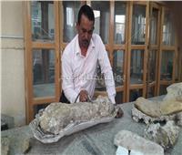اكتشاف بقايا ديناصورات عملاقة بالوادي الجديد