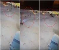 فيديو| حادث مروع لطالب في المعادي.. والسبب «الكلاب الضالة»