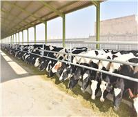 بالصور| بنك الطعام يفتتح مزرعة جديدة للإنتاج الحيواني