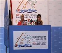 الأمم المتحدة: التنسيق بين الحكومات يضمن تنفيذ مشروعات صديقة للبيئة