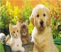 فيديو| «الزراعة» توضح شروط سفر الكلاب والقطط إلى الخارج