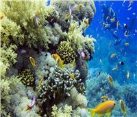 خلال مؤتمر التنوع البيولوجي.. جلسة عمل حول عالم السلاحف البحرية بلبنان