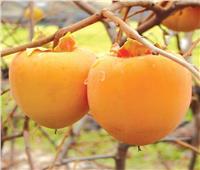 4 نصائح لمزارعي «الفاكهة المتساقطة» لزيادة الإنتاج خلال ديسمبر