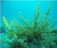عرض دور المجتمع المدني في حماية البيئة والحفاظ علي الثدييات البحرية