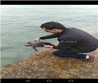 البيئة تصادر «كائنات بحرية» مهدده بالانقراض من أسواق شبين الكوم
