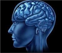 دراسة جديدة تكشف عن ارتباط حجم الدماغ بالذكاء