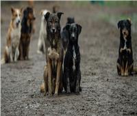 رئيس القطاع الديني بـ«الأوقاف»: نتلقى أمولا لصالح «الكلاب الضالة»