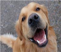 «الكلاب» حيوانات وفية ولكن !