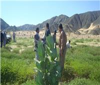 صور| وزير الزراعة يتلقى تقريرًا حول الجولات الميدانية لمكافحة الجراد بالصحراء