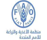 «الفاو» و«الجامعة العربية» تشكلان تحالفا للقضاء على الجوع في المنطقة