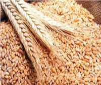 نقيب الفلاحين يطالب بإعلان سعر مرضي للقمح