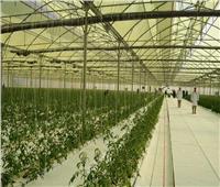 فيديو| تعرف على أهم مميزات المشروع القومي للصوب الزراعية