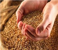 «سرقوا الصوامع».. اليوم محاكمة 11 مسئولا في «فساد القمح الكبرى»