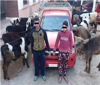 ضبط تشكيل عصابي تخصص في سرقة الماشية بدمياط