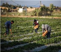الزراعة: 4.9 مليون طن إجمالي الصادرات الزراعية المصرية