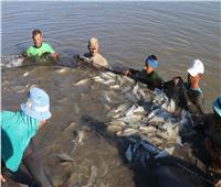حصاد 2018|«الثروة السمكية»: زيادة حجم الإنتاج من الاستزراع وتطهير البحيرات