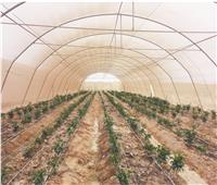 2019 عام الحصاد بالمحافظات