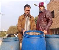 ضبط محل شهير يقدم «مخلل بالصراصير» في الإسماعيلية