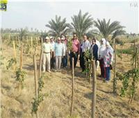 ننشر حصاد مركز البحوث الزراعية في عام 2018