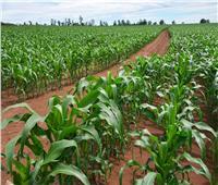 حصاد الزراعة في أسبوع| لجنة للغذاء وحملة لمكافحة القوارض وارتفاع الصادرات