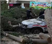 سقوط 3 شجرات على سيارة وحضانة أطفال في الإسماعيلية