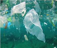 غلاب: مخلفات «الأكياس البلاستك» تُدمر الشعاب المرجانية والسلاحف البحرية