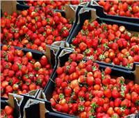 فيديو| الزراعة: نسعى لزيادة مساحات زراعة الفراولة في مصر