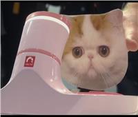 تقنية جديدة لإطعام الحيوانات الأليفة بمعرض «CES»