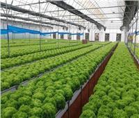 شاهد|«الزراعة» تطرح فيلما تسجيليا بـلغتين عن جودة المحاصيل
