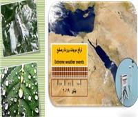 الزراعة: نشرة لتوعية المزارعين من الطقس والمناطق المهددة بـ«الصقيع»