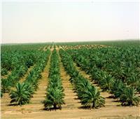الزراعة تنشر «انفوجراف» حصاد عام 2018 في 3 قطاعات