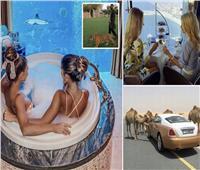 بالصور| سيارات فارهة وشيشة «ذهبية».. الوجه العالمي لرفاهية دبي