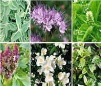 نصائح لمزارعي النباتات الطبية والعطرية.. تعرف عليها