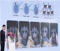 «شنغهاي» تعلن عن ولادة خمسة قرود بتعديلات جينية موحدة