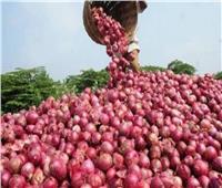 «الزراعة» تعلن عن فتح الأسواق التركية أمام البصل المصري