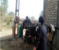 مصر الخير تنظم قافلة بيطرية لعلاج المواشي بالمجان في المنوفية