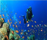 صور| تجربة فريدة في أعماق البحار.. 12 وجهة مصرية لعشاق الغوص