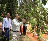 صور| أبوستيت يفتتح المرحلة الأولى من المزرعة المصرية المشتركة بتنزانيا