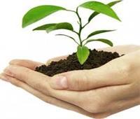«البحوث الزراعية» ينظم ورشة عمل مكافحة أمراض النبات..غدا