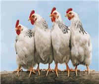 الزراعة: منع تداول الطيور الحية لصالح المواطن «بالقانون»