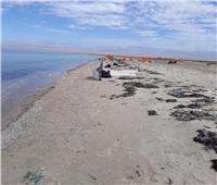 صور| إزالة تلوث «زيتي» بجزيرة «رأس سبيل» بالطور