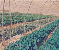 أبو ستيت: مشروع الصوب الزراعية غرب المنيا نجح رغم التربة القاسية