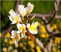 كنوز زراعية منسية| 62 مليون دولار صادرات الزهور.. وبرنامج قومي للنهوض بإنتاج التمور